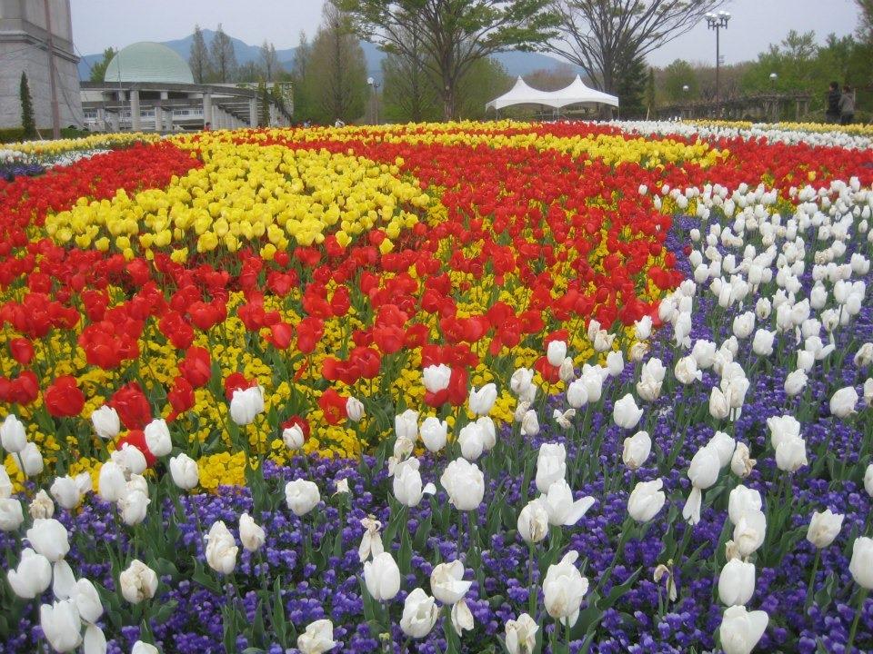 as flores, que, diferindo os tipos, florescem durante todo o ano No